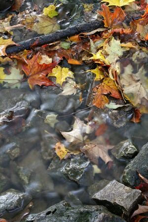 A closeup of a stream in autumn with lots of fallen leaves.  The shot was taken with a slow shutterspeed to  give the water it's milky look.