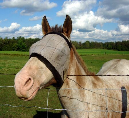 fench: A horse with a burlap sack covering its eyes.