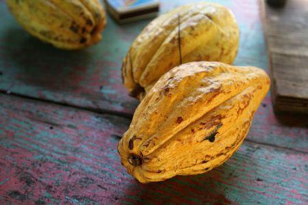 Rijpe vruchten cacao peulen vergadering een tabel.
