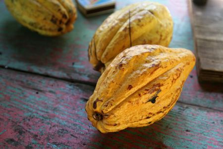 cocoa fruit: Ripe cocoa fruit pods sitting a table.