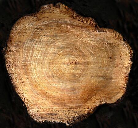The cross section of tree stump against black. Фото со стока