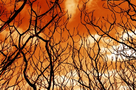 daunting: Ominous barren tree branches set against rich orange sky. Stock Photo