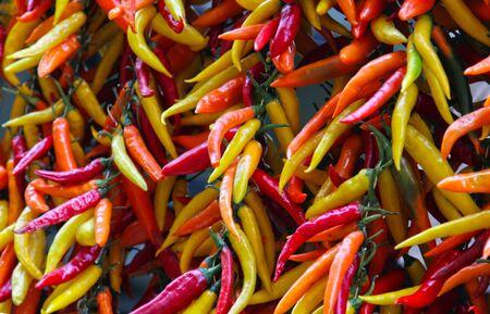 chiles picantes: Grandes racimos de m�ltiples colores pimientos picantes