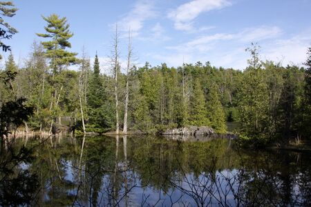 cedars: The treeline at Rockwood Conservation Area (near Guelph, Ontario, Canada) reflecting off the creek.