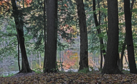 autmn: The trunks of trees silhouetted against a pond with autmn leaf colours reflecting. Stock Photo