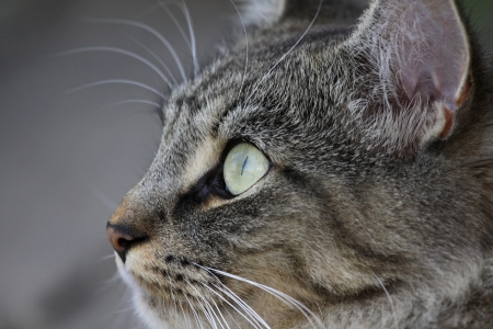 upclose: The face of a cute little domestic cat.