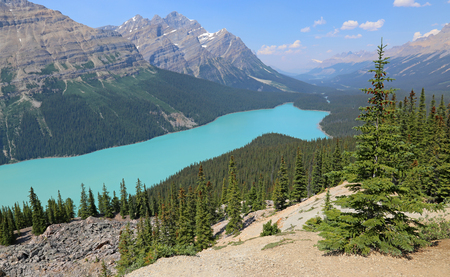 banff: Peyto Lake (pea-toe) in Banff National Park, Alberta, Canada.
