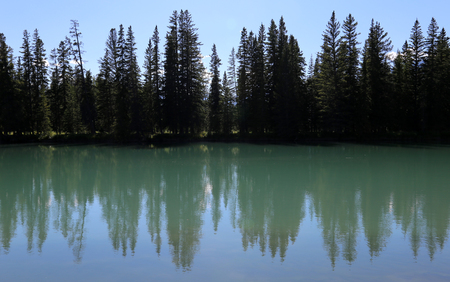 treeline: An evergreen tree line silhouette reflecting in the Bow River. Shot in Banff National Park, Alberta, Canada.