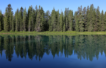 An evergreen tree line reflecting in the Bow River. Shot in Banff National Park, Alberta, Canada.