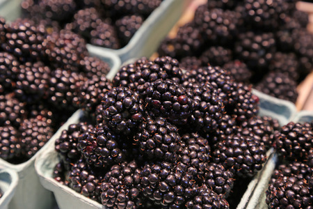 Boxes of fresh blackberries, on sale at a market. Imagens