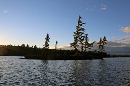 pine tree silhouette: The sihouettes of pine trees at dusk, on a lake in Algonquin provincial park, Ontario, Canada. Stock Photo