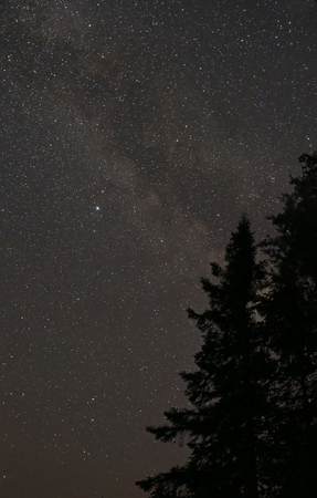 The Milky Way shot against the silhouette of spruce trees.  Shot in Algonquin Provincial Park, Ontario, Canada.