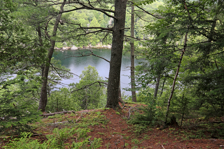 A view through the trees of Jack lake in Algonquin Provincial Park, Ontario, Canada.