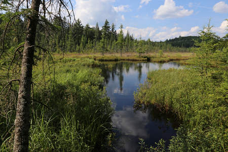 The creek leading into Mizzy Lake in Algonquin Provincial Park, Ontario Stock Photo