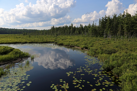 The Spruce Bog as seen from the Spruce Bog Boardwalk in Algonquin Provincial Park, Ontario, Canada.