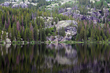 A reflection of evergreens and the cliff face into Bear Lake.  Shot in Rocky Mountain National Park.