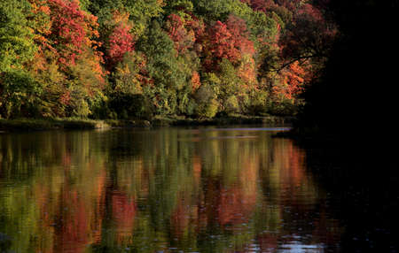 The silhouette of willow tree branch hanging over the Grand River with fall trees in the background, shot in Kitchener, Ontario, Canada. Foto de archivo