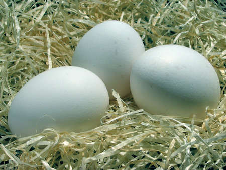close-up of white eggs photo