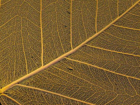 Dried leaf photo