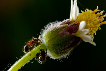 unity small flower: Ants with flowers  Stock Photo