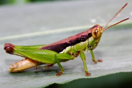 Grasshopper beautiful