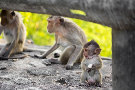 Baby monkey and Family photo