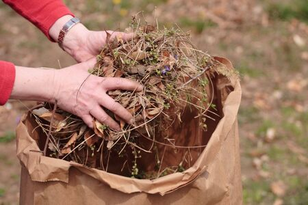 clippings: Cleaning up garden by picking up grass clippings and leaves with hands
