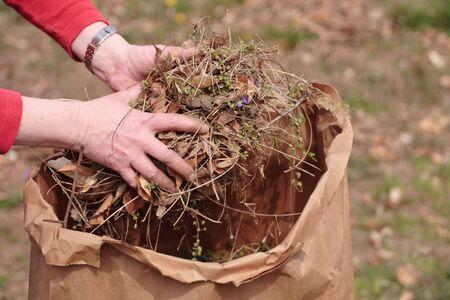 clippings: La limpieza de jard�n por recoger la hierba cortada y hojas con las manos