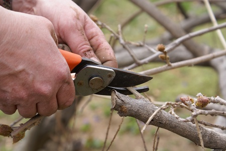 pruning shears: Hand with pruning shears