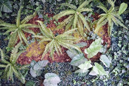 ferns: Wall of plants (ferns, ground cover, moss) Stock Photo