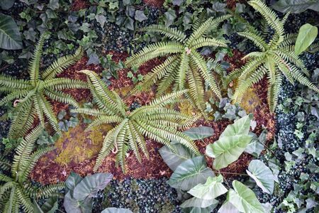 Wall of plants (ferns, ground cover, moss) Reklamní fotografie