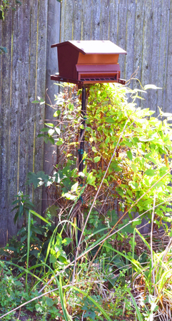 Brown metal bird feeder in backyard