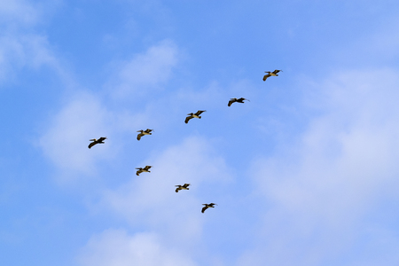 Birds flying in V formation in Tulum, Mexico on a sunny day