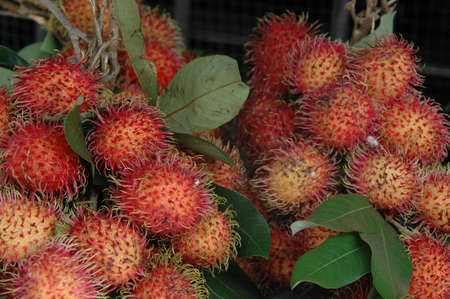lychees: lychees on branch