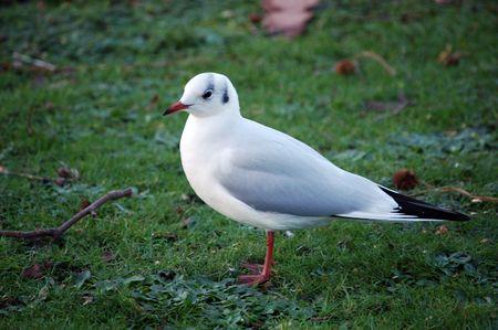 hyde: A bird in Hyde Park - London, England Stock Photo