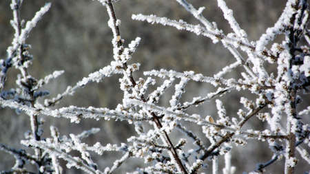 clod: frosted branches