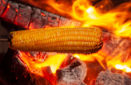 Corn roasted in the bonfire of the festival of sao joao. Traditional delicacy of the June festivities in northeastern Brazil. Food and gastronomy