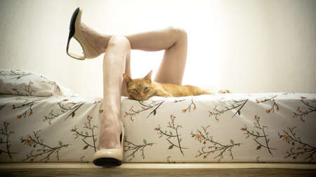 Female Legs in Bed with a Cat