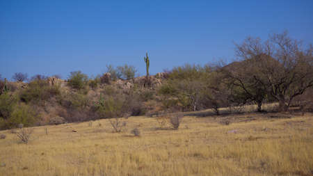 Sonoran Desert Spring Daytime Scene Stock Photo
