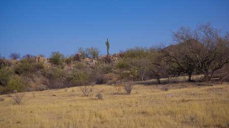Sonoran Desert Spring Daytime Scene Stok Fotoğraf