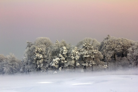 group of snow covered trees with  strong frost photo