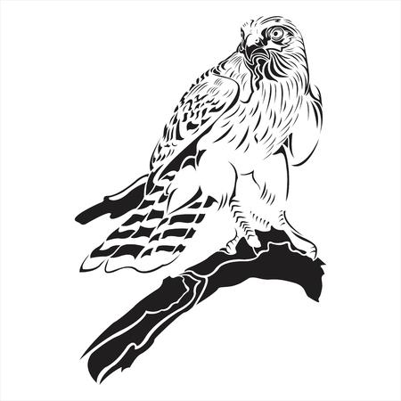 falcon,eagle,hawk,black,white,tattoo,details,bird,wing Stock fotó - 80170185