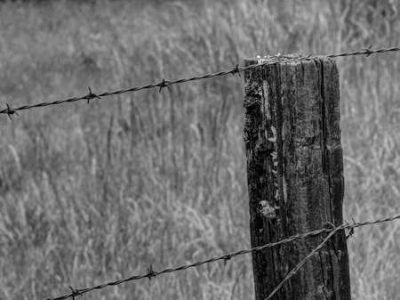 barbed wire fence: Rustic Barbed Wire Fence in Black and White