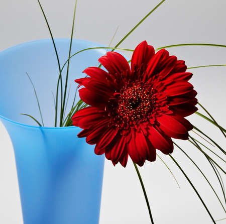 Plastic transparent vase with red gerber photo