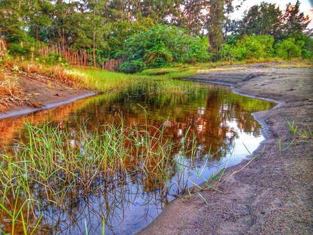 swampy: Swampy area