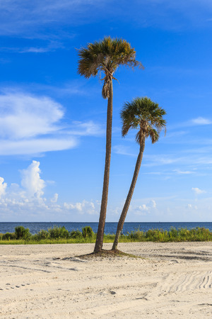 Two palms overlook the Gulf of Mexico with azure skies and white clouds