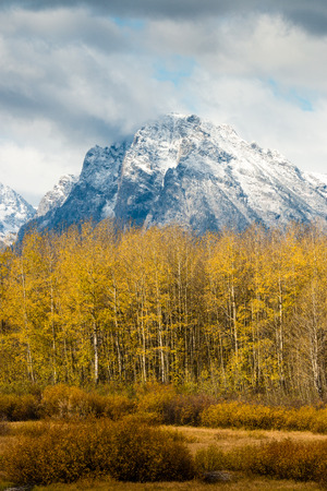 Storm clouds lift over snowcapped mountain peaks with a forest of aspen trees with yellow leaves.