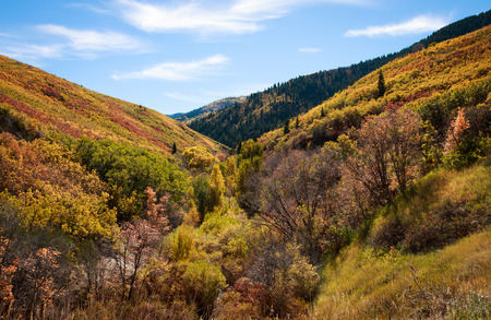 A canyon full of plants and trees show autumn color changes in a mountain with blue sky and clouds Standard-Bild