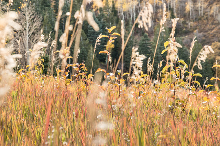 Grass in an alpine meadow glows in the autumn sunset, with grasses turning from green to yellow and red. Standard-Bild