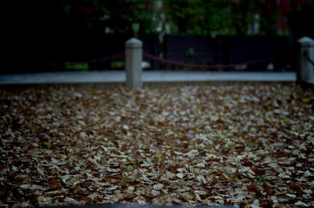fallen leaves: fallen leaves Stock Photo